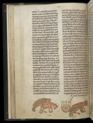 Marginal Drawings Of The Bear Of St. Firmin, In Gerald of Wales's 'History And Topography Of Ireland'